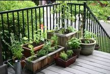 → gardening & self-sufficiency; / my green thumb is huge. ;D / by Tiffany Campbell