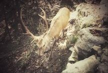 Wildlife in Valtellina / Amazing wildlife in the forest