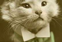 Vintage and Retro Kitties / Vintage and Retro Cat Photos and Illustrations / by Kittyworks' Cats