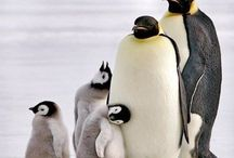 Penguin~