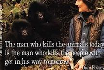 Me and My Monkey / In memory of Dian Fossey