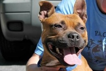 Cute Pooches for Adoption / by ABC7 News WJLA