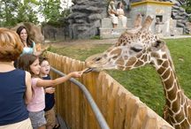 Plan Your Visit to the Detroit Zoo