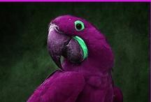 Bird - Beautiful / by Alyne Pelletier