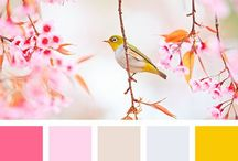 Colorcombinations