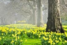 Spring Fever / Spring style