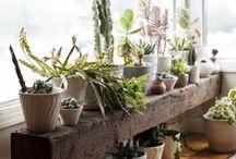 Plants | Plantas / Plantas y jardines