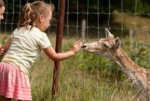 Ferme exotique / Exotic Farm / Notre ferme exotique est parfaite pour une sortie en famille : petits et grands seront fascinés par ces animaux rares.