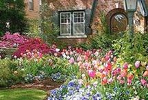 No Grass Front Lawn / There are many things better than grass - and more colorful!