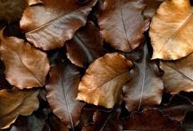 Beautiful Brown / by Tracy Rittenhouse Garner