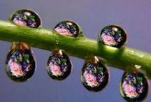"The magic of water n dew drop / ""Natures beauty soothe my eyes, Refreshes my soul, Helps in imagination..."" Debolina"