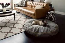 Pet-Friendly Apartment Living / Ideas, Tips, Tricks for apartment living with pets.