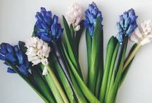 Blue Hyacinth by Lily-Flame / We love the deep, intense aroma of hyacinths. Close relative to the blue bell, but so much earlier, they remind us of spring to come after winter bleakness. They are all about memory and desire. Just like T. S. Eliot says.  www.lily-flame.co.uk