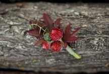 Holly Hill by Lily-Flame / The scent of pine, ever green, winter berries and a touch of frost to sharpen the senses.  www.lily-flame.co.uk