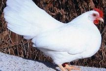 Chicken Coop / by Linda