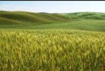 Energía verde / En Remica apostamos por la energía verde para cuidar de nuestra madre tierra.