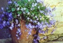 Gardening & Landscaping / by Cheryl Morris-Ireland