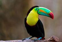 Amazing Animals /