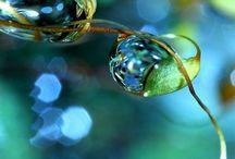 Foto natur