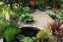 Garden/Patio/Nature