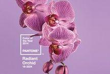 Pantone - Orquídea radiante / Prepare-se para a cor pantone de 2014, orquídea radiante.