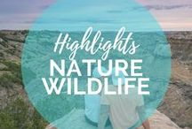 Wildlife & Nature Highlights / The world is such a beautiful place! In this board we show you the best sunrises that will make you get out of bed at 5am, amazing National Parks around the USA and the rest of the world and all the amazing creatures and wildlife encounters to experience on your travels. || Read more on: gettingstamped.com/?s=wildlife and gettingstamped.com/?s=nature