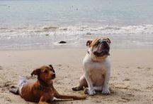 Viagens Com cachorros! / Leve seu cachorro para viajar com você!