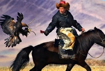 Mongolia / by Point of View Travel