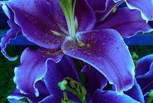 Floral # 1