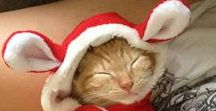 Koty - Cats / O kotach - kot, kotek, kotki, kocury