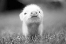 Animals / Cute animal pictures