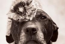 relaciones animales