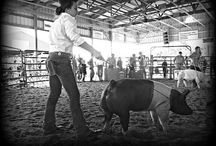 LiveSTOCK + Stock Show / by Mary Johnston