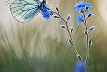 Butterflies / Perhosia ympäri maailmaa