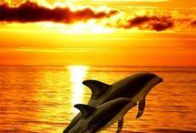 Delfinek,bálnák