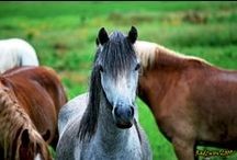 Horses / To all the Horses.  https://www.facebook.com/SpeedShopNorth