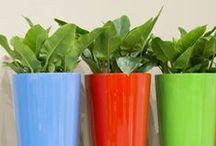 Accessoires in de tuin / Extra tuinelementen als kruidenbakken, kunst, decoratie, zonwering, klimsteunen