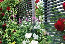 Afscheidingen in de tuin / Schuttingen, schermen, hekwerken, trellisschermen