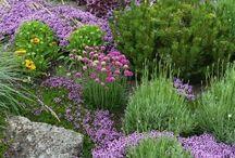Ewa w / Garden inspirations