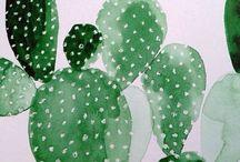 Kaktusser mm