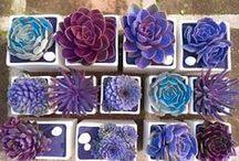 FLOWERS/PLANTS / KVĚTINY/ROSTLINY
