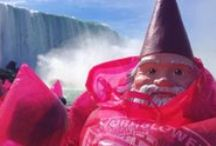 Travelocity's Roaming Gnome Photoshoot / Travelocity's Official 'Roaming Gnome' visited Hornblower Niagara Cruises this weekend. The official globetrotting ornament. Nabbed from a very boring garden to travel the world.
