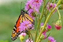 Pollinators and Plants / Pollinators and the plants that sustain them