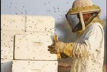 Home :: Garden :: Bees