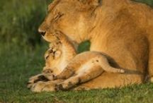 Mothers and their offspring  -Genuine Love and Care / All kind of animals