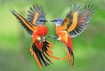 Colorfull Birds and Colorful Ducks and... - All the Winged Beings / Love, Beauty, Lightness