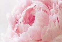 Soft / by Nicole Mosher