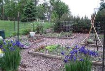 Gardening / Growing, harvesting, canning + preserving.