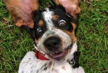 My favorite dog- Basset Hounds / by Tina