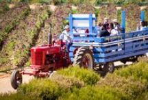 Attractions & Events / Things to do at The Flower Fields